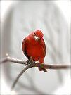 Ya Got That Look by NatureGreeting Cards ©ccwri