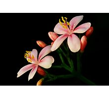 BEAUTIFUL PINK FLOWER PICTURE/CARD Photographic Print