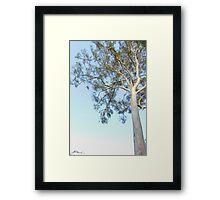 Gumtree Dreaming Framed Print