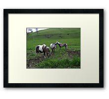 Posh Ponies Framed Print