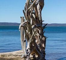 Fallen Tree by John Catsoulis