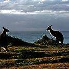 Best Friends at Yuraygir National Park by myraj