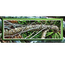 Palm Survival Photographic Print
