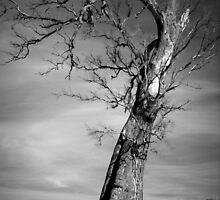 Scary Tree- Jamestown by Ben Loveday