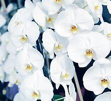 White orchids art photo print by ArtNudePhotos