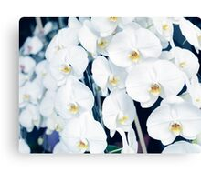 White orchids art photo print Canvas Print