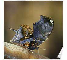 Gold leaf butterfly Poster