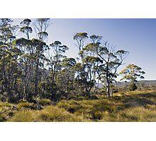 Cradle Mountain bushland Photographic Print