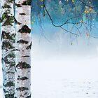 Birches in the mist by Silvia Ganora
