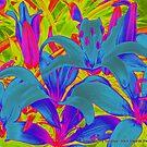 color fest by Meladana