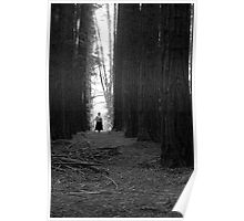Redwood Forest, Warburton Poster