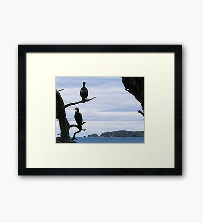 Perched On Whangaparaoa Framed Print