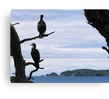 Perched On Whangaparaoa Canvas Print