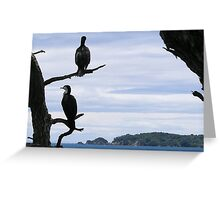 Perched On Whangaparaoa Greeting Card