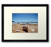 Waiheke Island Seashells Framed Print