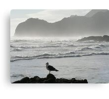 Piha Beach In New Zealand Canvas Print