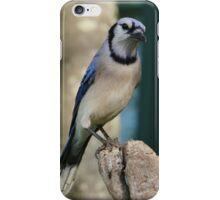 Bluejay Morning iPhone Case/Skin