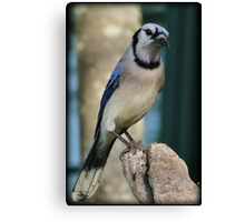 Bluejay Morning Canvas Print