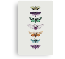 Techno Moth Collection Canvas Print