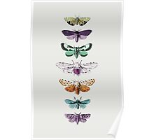 Techno Moth Collection Poster