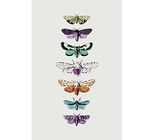 Techno Moth Collection Photographic Print
