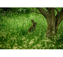Amongst The Grasses Photographic Print