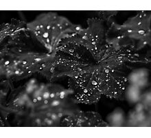 Watery Jewels Photographic Print
