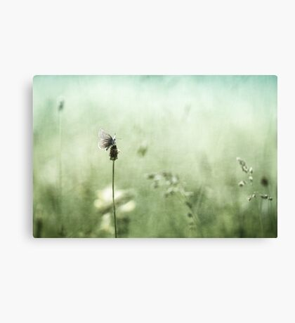 Hard to find.... Canvas Print