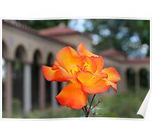 Franciscan Monastery rose garden, DC Poster