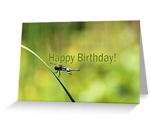 Birthday Dragonfly Greeting Card