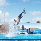 Dolphin Marine Magic - Dolphin Spins by Joe Hupp