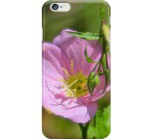 Showy Evening Primrose iPhone Case/Skin