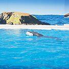 Dolphin Marine Magic - Bucky  by Joe Hupp