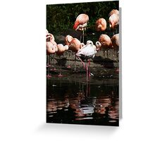 Colourful Brids Greeting Card