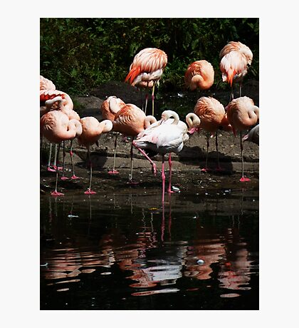 Colourful Brids Photographic Print