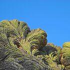 Fantastic Saguaro Crest by Lynda Lehmann