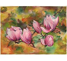 Magnolia Blossoms (in Watercolor) Photographic Print