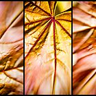 A Leaf in Three Parts by OzPhoto