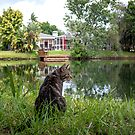 Hangout by the Pond by Mikell Herrick
