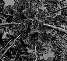 Trees by Jason  Crespin