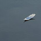 floating feather by cliffordc1