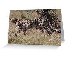 Cheetah on the Hunt Greeting Card
