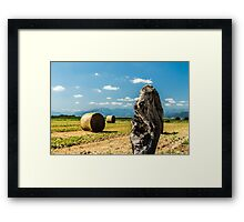 hay bale in the fields Framed Print