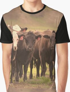 Curious Cows  Graphic T-Shirt