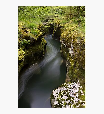 Dark water and springtime greenery Photographic Print