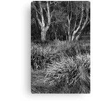 Grass Beds and Morning Trees Canvas Print