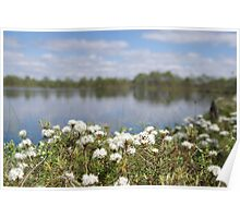 Wild rosemary in bloom Poster