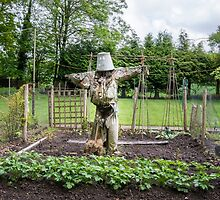 Scarecrow by Sue Martin