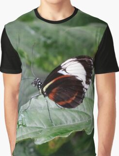 Heliconius butterfly Graphic T-Shirt