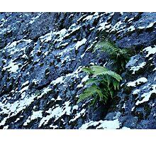 Tenacity Photographic Print